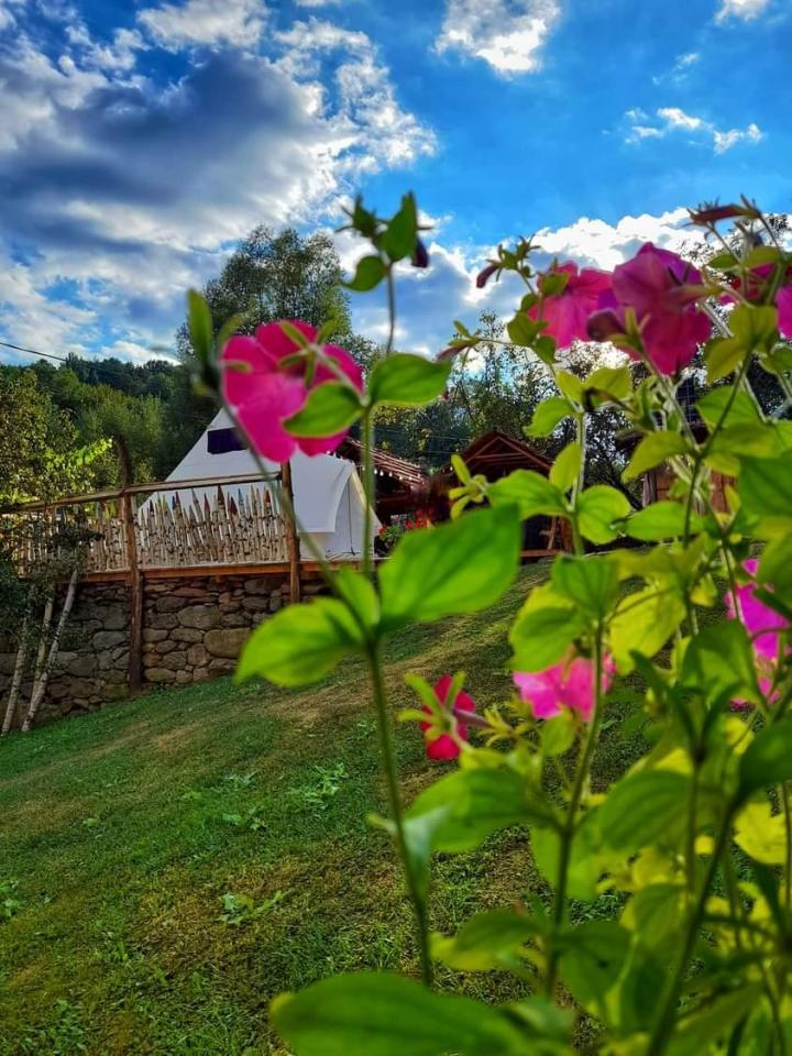 Cort Lazy Dreams Voia Glamping